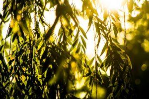 """@MonFeijoo Salí a fotografiar tu canción """"Agosto"""" y no me gustó lo que ví, odio las máscaras porque no puedo ver la gente sonreír y me conseguí con este sol entre los árboles, es el agosto que quiero, todo luz, como tu canción ? Pablo Barboza"""